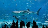 Georgia Aquarium: le plus grand aquarium dans le Monde