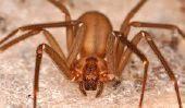 Top 10 des araignées les plus venimeux dans le monde