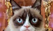 """Grumpy Cat Nouveau film: premier trailer de """"pire Noël de Grumpy Cat jamais 'Sortie [Visualisez]"""