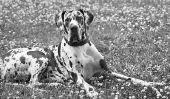 Assurez collier de chien avec le nom lui-même - Instructions
