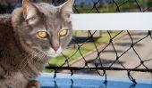 Joindre une assurance de balcon pour les chats - comment cela fonctionne: