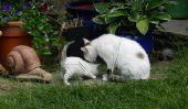 Acheter et installer dans un deuxième chat - si ça va marcher