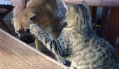 5 chats avec une moyenne Gauche-crochet