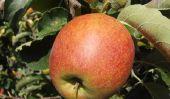 costumes de fruits se Coudre - tel succès une pomme
