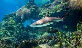 Costumes pour les adultes - à coudre un costume de requin