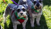 764 chiens dans bandanas battu un record du monde ce week-end