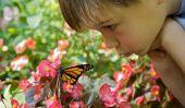 10 Beautiful Gardens papillon aux États-Unis