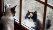 Un chat-en liberté peut être un chat d'intérieur?  - Conseils