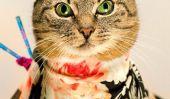 Houmous le chat est notre plus récent icône de la mode!