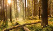 Cycle de matières déclarées à l'étape de la forêt par étape