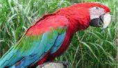 Top 10 des plus beaux oiseaux dans le monde