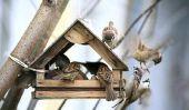 Construire une maison d'oiseau lui-même - comment cela fonctionne: