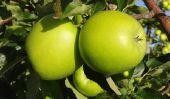 Vert pomme - les produits amincissants hypocaloriques