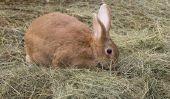 Rabbit - tout au sujet de nidification