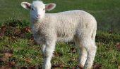 face moutons make-up - Lignes directrices pour un carnaval de maquillage
