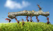 Les fourmis mangent les gens?  - Renseignements généraux