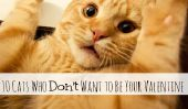 10 chats qui ne veulent pas Be Your Valentine