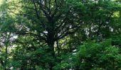 Les crampons un arbre jusqu'à - si ça va marcher