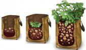 Comment faire pousser des pommes de terre En planteuse Sacs