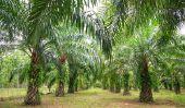 Palm est gras malsains?