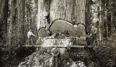 Les Lumberjacks Qui abattus séquoias géants de Californiaâ € ™