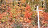 Tombe automne plantation - Conseils