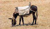 Différence entre mule et mules - pour les laïcs a simplement expliqué