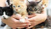 Combien de chats peuvent vous le propriétaire jusqu'à ce que vous êtes officiellement un â € ~Cat Lady?