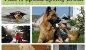 10 chiens partagent comment ils prévoient dépenser Spring Break