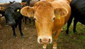 L'affaire Grass-Fed, boeuf biologique et les produits laitiers: Plus de rose Slime évitement