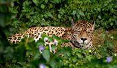 Conseils maquillage - un léopard réussir si