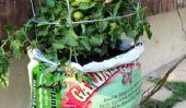 Comment faire pousser des tomates sans jardin