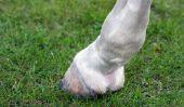 """Avenir avec """"naviculaire"""" - signifie que le syndrome pour votre cheval"""