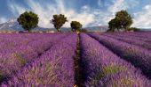Les champs de lavande de Provence - Conseils de voyages