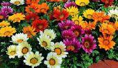Top 10 des meilleures Fleur espèces dans le monde