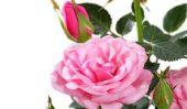L'utilisation de fleurs en plastique - en plastique décorative