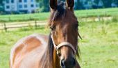 Assurez-buvard lui-même - Instructions pour les amateurs de chevaux
