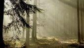 Instructions pour le jeu «Forêt enchantée» par Ravensburger