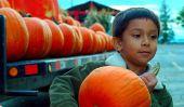 Orange You Glad nous avons rencontré ?: 15 Raisons Pour les enfants adorent et Leurs Pumpkins