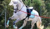 Nom de cheval pour un étalon - afin de choisir une appropriée