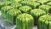 Comment faire pousser un Watermelon Place