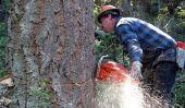 Abattage et la coupe d'arbres - donc obtenir le certificat de tronçonneuse