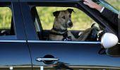 Chiens sans-abri apprendre à conduire en Nouvelle-Zélande