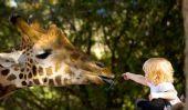 Planifier un anniversaire au zoo pour les enfants - il est drôle