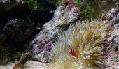 poissons de Neon - donc gardez humainement