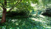 L'écosystème de la forêt et sa biologie