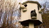 Texans pigeons - Avis