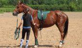 Comme je monte un cheval?  - Comment ça marche