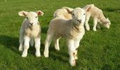 des conseils de maquillage pour un mouton - donc vous sera Shaun