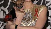 Cult Pooch est mort: Paris Hilton pleure Tinkerbell